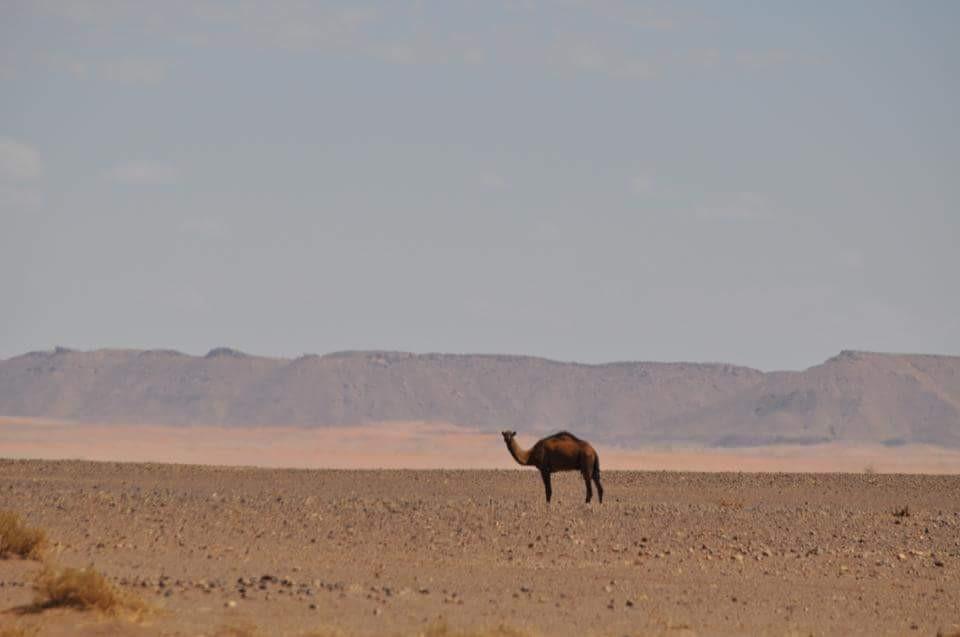 Marruecos028