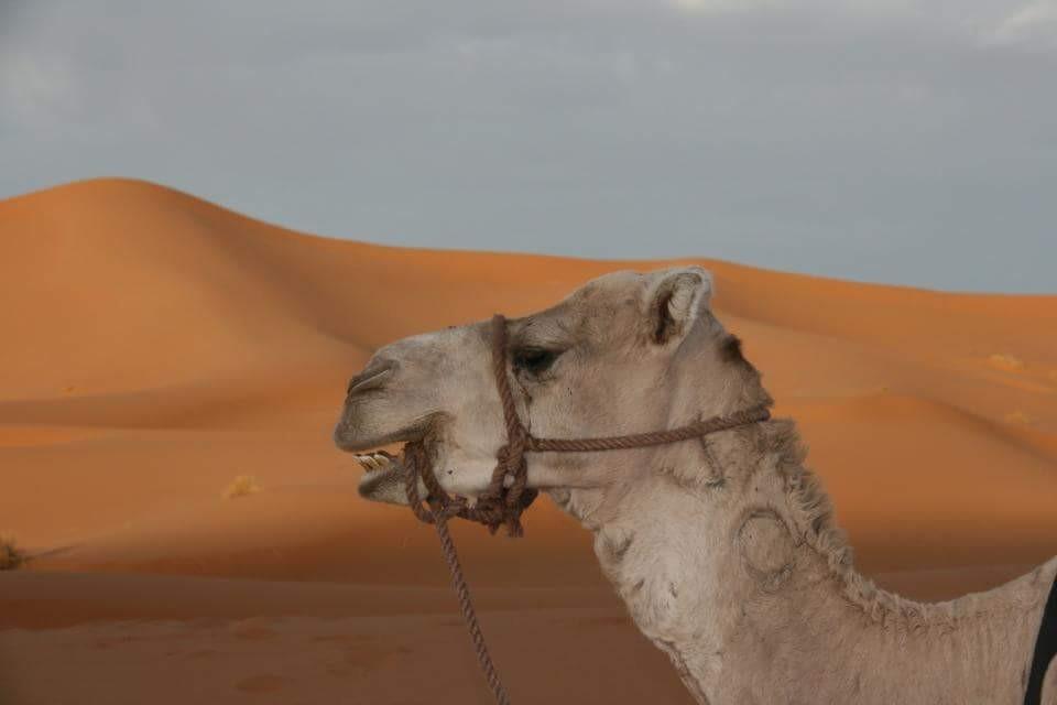 Marruecos036